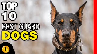 TOP 10 BEST GUARD DOG BREEDS