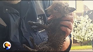 Download Youtube: CRYING Baby Fox Rescued From Drain | The Dodo