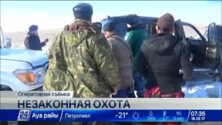 Браконьеры убили 19 краснокнижных сайгаков в Актюбинской области