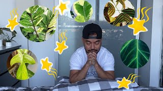 Top 10 Wishlist Houseplants   Plants I Want To Add To My Collection