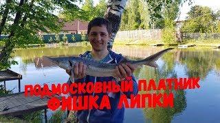 Платная рыбалка в никитском что ловить