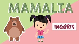 Belajar Membaca Nama-nama Hewan Mamalia dalam Bahasa Inggris Bagian 3 | Bunbun Learning Mammals