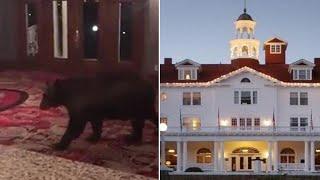 Bear Walks Around Lobby of Colorado Hotel That Inspired 'The Shining'