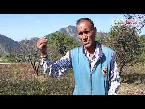 उत्तराखंड में बढ़ रही है बागवानी और ड्राई फ्रूट्स की खेती की संभावना