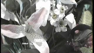 مازيكا الفنان- رمضان زايد - ليتني زهر تحميل MP3
