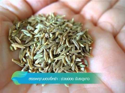 การรักษากับปรสิต Artemisia คาร์เนชั่น
