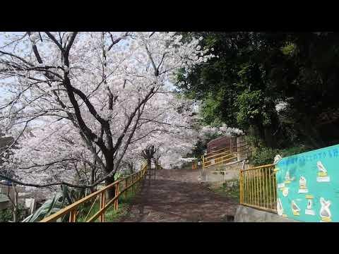 桜隧道「桜のトンネル」