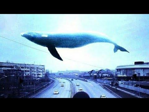 Топ песен Синего кита !!