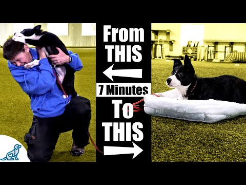 Teach Your Puppy To Calm Down With This 7 Minute Exercise ...