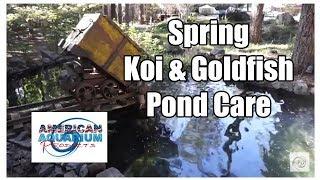 Koi Fish & Goldfish Pond Care- Complete Spring Maintenance