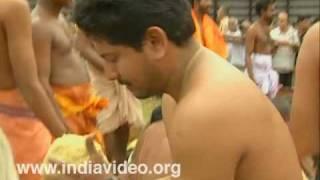 Aanayoottu - the ceremonial feast for the elephants