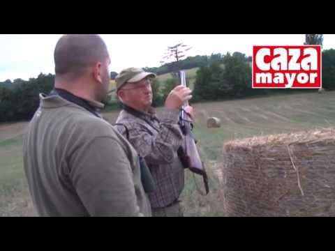 Los secretos de la caza del corzo