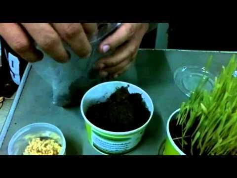 การรักษาและการ worming dekaris Vermoxum