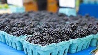 Running A Successful Homestead Business Raising Blackberries