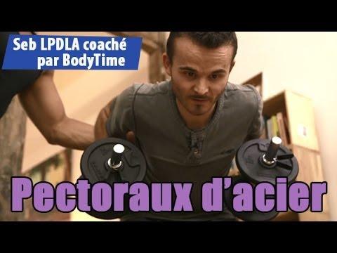 Les muscles la structure la disposition
