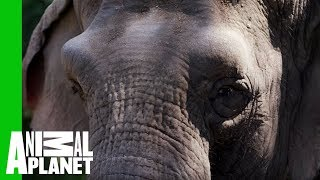 Fighting the Ivory Trade