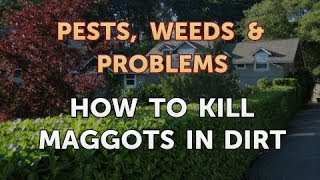 How to Kill Maggots in Dirt