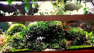 1000 litrów - uproszczenie systemu / adaptacja pod roślinny