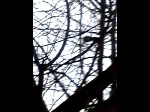 Eichhörnchen !!!! Futter jagt #1