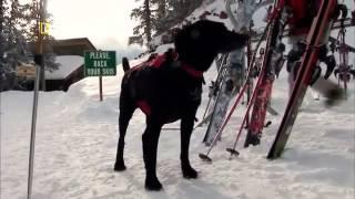 Perros Extraordinarios   El instinto, un sexto sentido,2