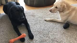 Olive and Mabel. Episode 2 - Game of Bones