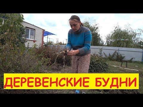 Деревенские будни / Закручиваем салаты / Выкапываем луковицы / Пополнение в хозяйстве