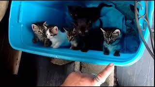 Уморительный котик повышает настроение | Приколы до слез - Collab #178
