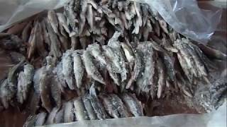Когда и какие рыбы ловить в сибири