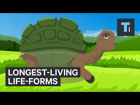 The World's Longest-Living Life-Forms