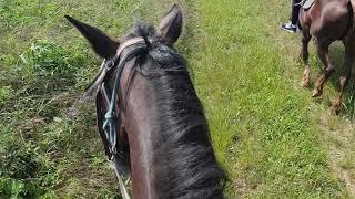 На лошадях катаемся!!! Удовольствие через край. Анапа.  Сукко. едем в лес