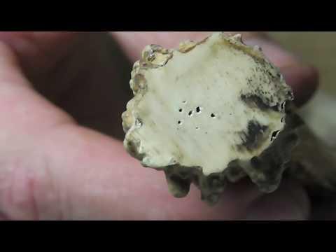 Камень талисман для овна девушки