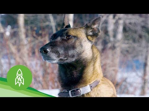 Meet the Dogs Fighting Wildlife Crime