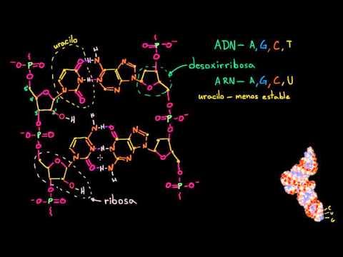 Estructura Molecular Del Arn