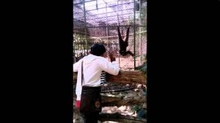 Arash feat. T-Pain 'Sex Love Rock N Roll (SLR)' (O