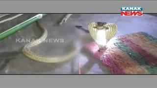 Snake Killed With Arrow In Baripada