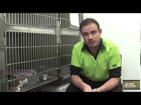 Pet Insurance For Pre-Existing Conditions – Renes Thoughts