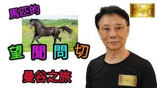 馬匹的「望、聞、問、切」…曼谷之旅 Day 1【梁定華一言堂…2019-2020馬季前瞻】
