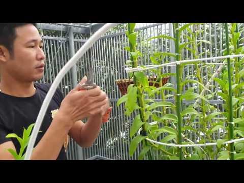 Mô hình giàn lan ĐẲNG CẤP Phong cánh BIỆT THỰ lan rừng thân thủ lá mít - lan rung an viet