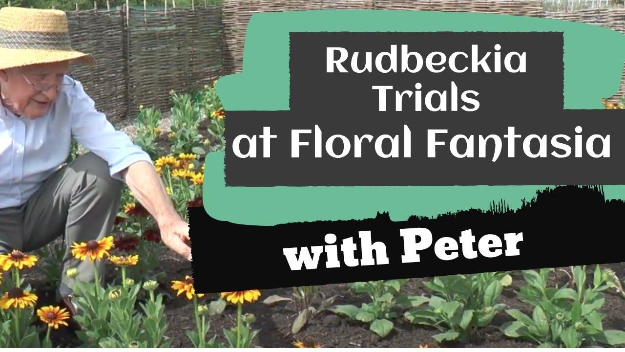 Rudbeckia Trials at Floral Fantasia