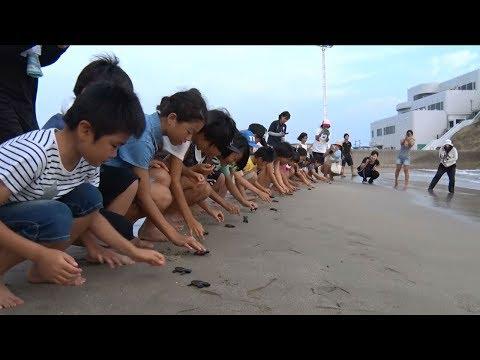 種子島の学校活動:茎南小学校ウミガメ放流活動2018年