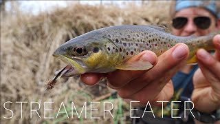 EARLY SPRING STREAMER ACTION (Fly Fishing Wisconsin Driftless Region)