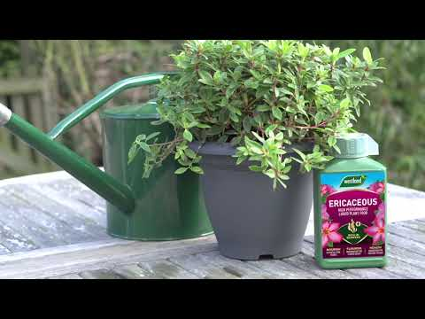 ericaceous feed Video