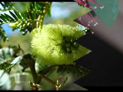 Welcher Komplex der Vitamine bei warikose