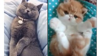 Meilleures Vidéos Drôles de Chat et de Chien 🐶🐱- Best Funny DOGS et CATS #174