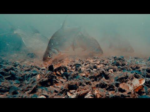 Рыбалка на Фидер - Ловля Леща Осенью   Прикормка и Подводная съёмка