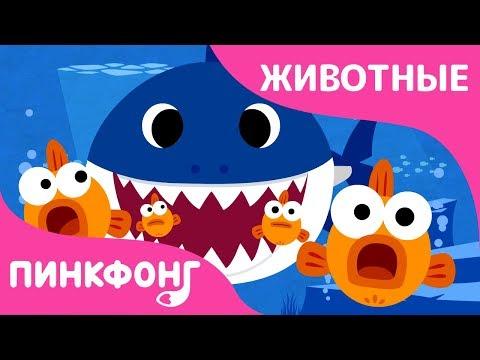 Акулёнок | Песни про Животных | Пинкфонг Песни для Детей