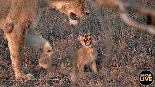 safariLIVE - Sunset Safari - October 19, 2019