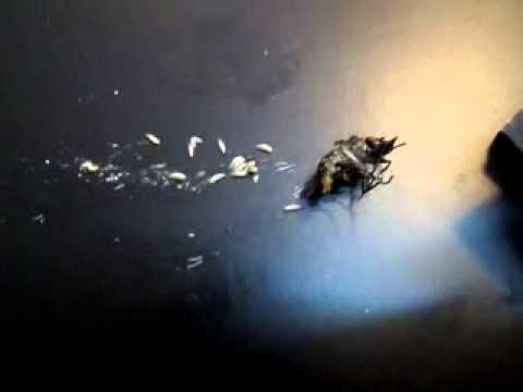 La pulizia da semi di girasole di zucca di parassiti