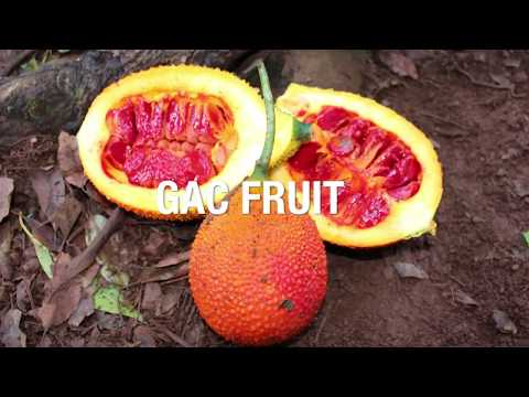 Fruta Gac ou Gak Fruit - Momordica cochinchinensis