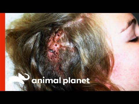 Betegségek és a paraziták kezelése